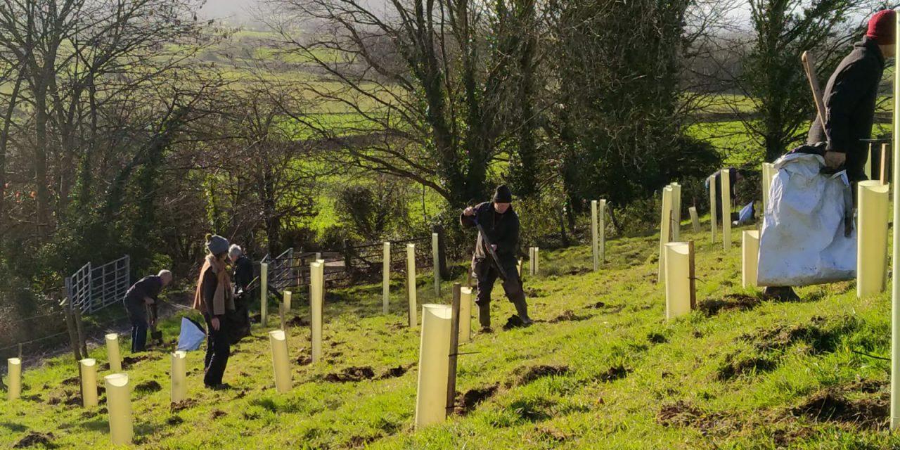 Get ready for autumn 2021 tree planting season!